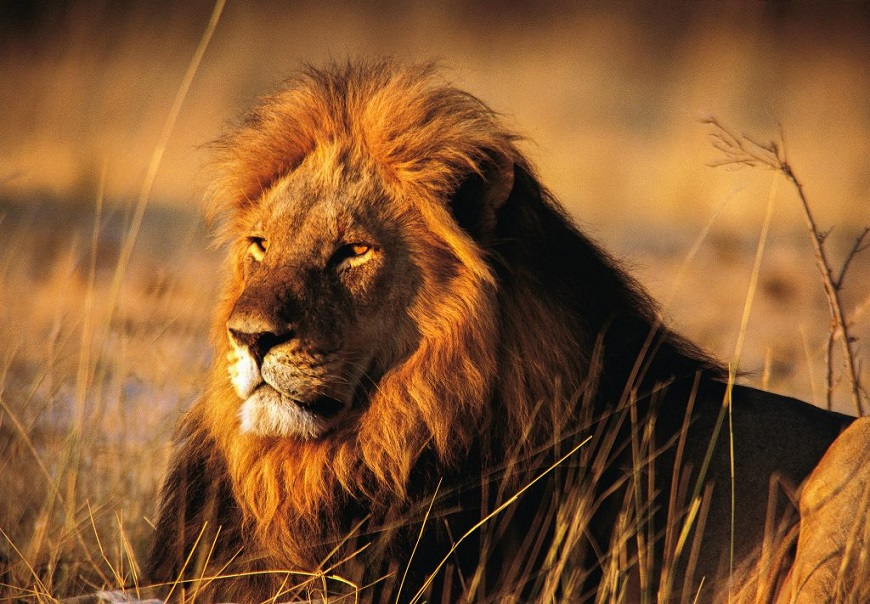 Загадки про льва