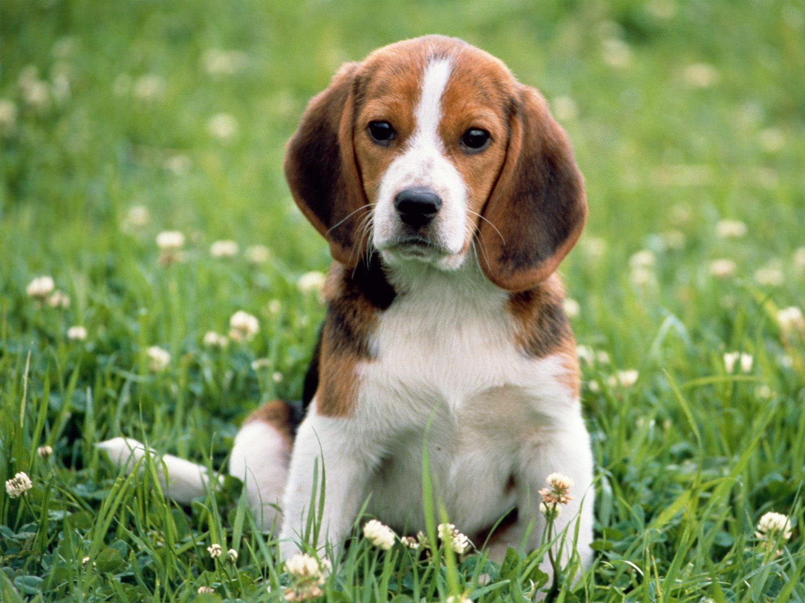 Загадки про щенка